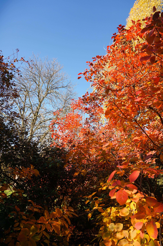 Autumn Winter Newsletter 2018